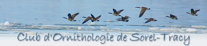 Club d'ornithologie de Sorel-Tracy